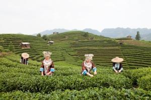 iStock_Dong.many.tea.field-1